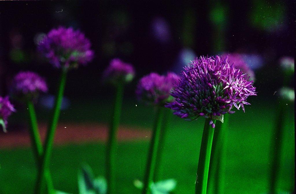 flowers20005.jpg